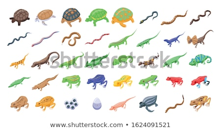 vector set of lizards Foto stock © olllikeballoon