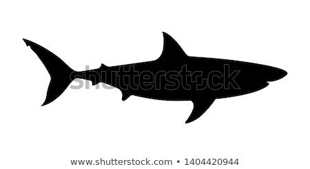 Czarny sylwetka rekina biały charakter morza Zdjęcia stock © Artspace