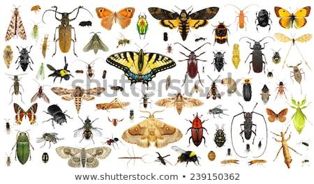 Conjunto besouro branco ilustração natureza fundo Foto stock © bluering