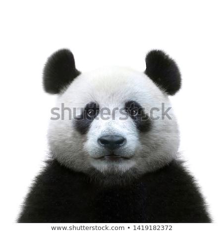 panda · uyku · çay · fincanı · örnek · sanat · siyah - stok fotoğraf © colematt