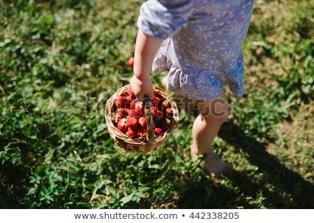 Freshly Picked Strawberries In The Basket Stock photo © AndreyPopov