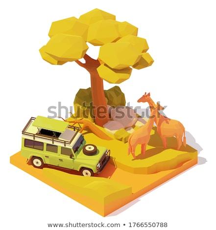 Vetor isométrica África safári ilustração carro Foto stock © tele52