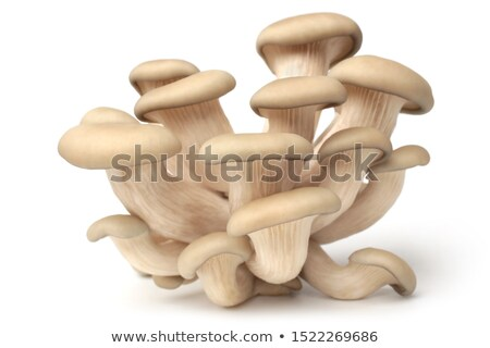 oyster mushrooms or pleurotus ostreatus mushrooms stock photo © stoonn
