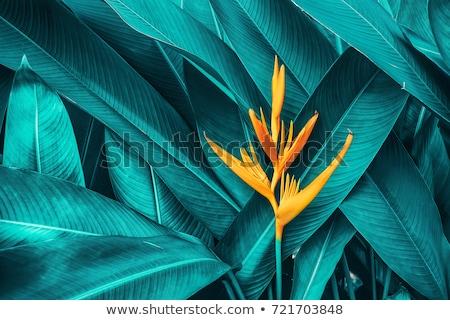 Yellow flower with green leaf Stock photo © boroda