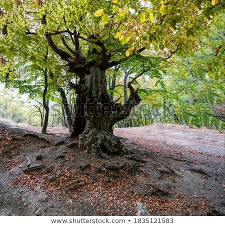 martwe · drzewa · mleczny · sposób · niebo · krajobraz · przestrzeni - zdjęcia stock © pedrosala