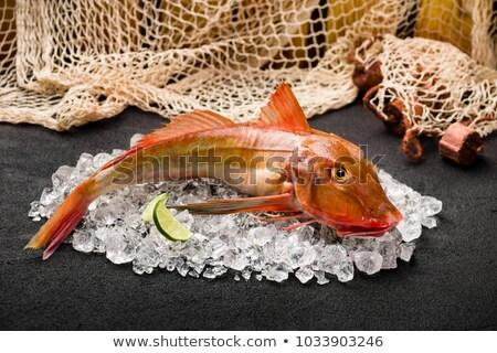 ванна рыбы два свежие изолированный белый Сток-фото © Antonio-S