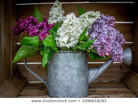 purple watering can with green plant stock photo © zhekos
