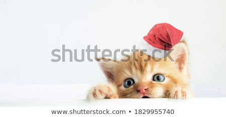 Kitten in a Christmas hat Stock photo © vlad_star