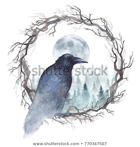 raven crow in snow stock photo © pictureguy