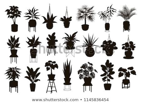 vektör · logo · süs · bitkiler · bahçe · çiçek - stok fotoğraf © angelp