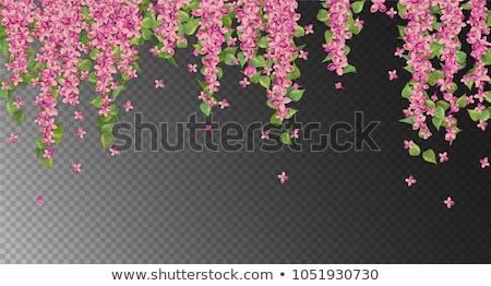 suspendu · fleur · panier · coloré · extérieur · de · la · maison · maison - photo stock © ozgur