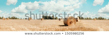 harvested bales of straw in field  Stock photo © Mikko