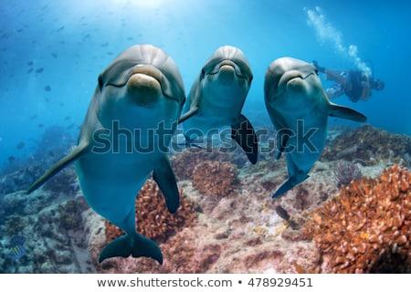 Heureux dauphins natation eau mer amusement Photo stock © c-foto