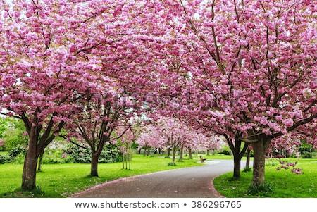Virágzó fa utca sáv bicikli virág Stock fotó © meinzahn