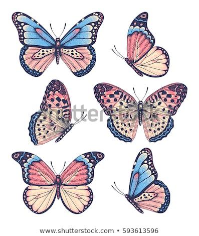 Kroki kelebek vektör bağbozumu eps 10 Stok fotoğraf © kali