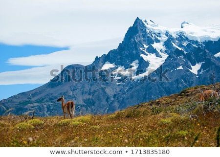 dramatic peaks in the patagonian andes stock photo © wildnerdpix