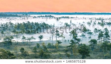 Ködös reggel park Lettország égbolt fű Stock fotó © amok
