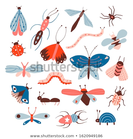 Decoratief kever geïllustreerd tattoo grafische Stockfoto © Soleil