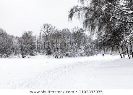 scenic tree alley in winter with snow covered fields  Stock photo © meinzahn