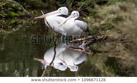 ストックフォト: 白 · 楽しむ · 太陽 · 東部 · バラ色の · 鳥