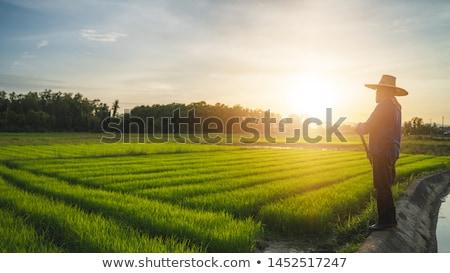 Nero uomini donne lavoro farm Foto d'archivio © vectorikart