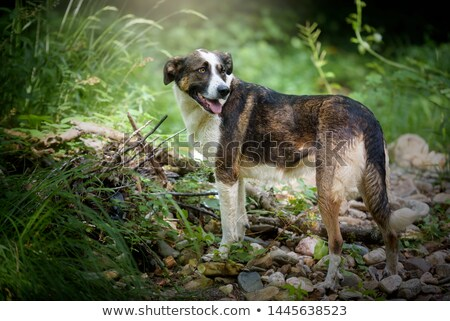 mixed breed brown dog with magic eyes portrait in black backgrou stock photo © vauvau