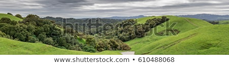 lush green winter panorama at briones regional park stock photo © yhelfman