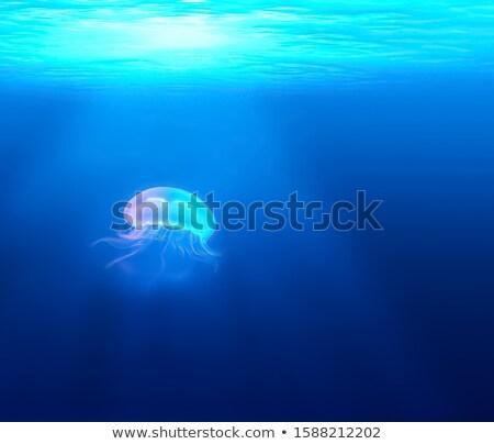медуз плаванию океана иллюстрация морем фон Сток-фото © bluering