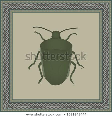 ストックフォト: 昆虫 · 画像 · フレーム · ベクトル · アンティーク · 蝶