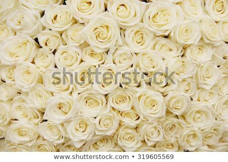 花束 白 バラ 結婚式 愛 バラ ストックフォト © Melnyk
