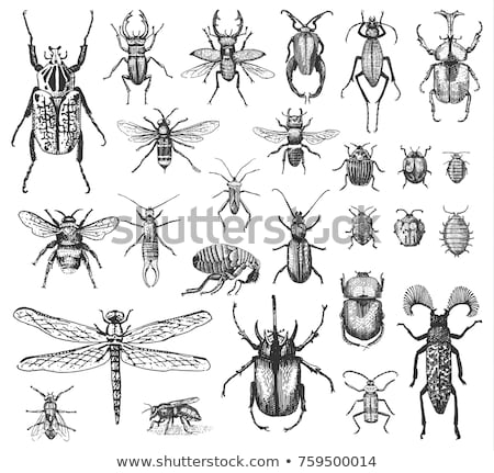 Beaucoup insecte illustration heureux design Photo stock © bluering