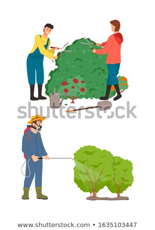 Worker Spraying Bushes of Plants, Roses Flora Stock photo © robuart