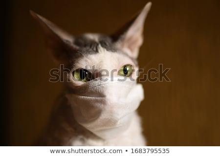 Stockfoto: Masker · witte · grappig · portret · oneven · kat