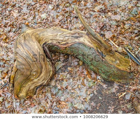 Raiz pormenor acima árvore madeira Foto stock © prill