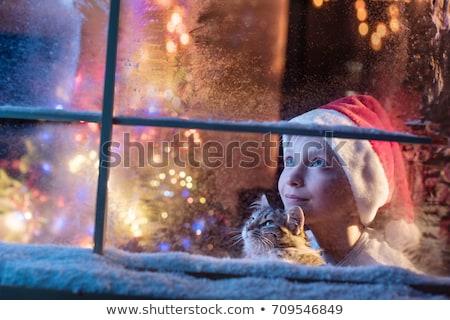 Cats waiting for Christmas Stock photo © MyosotisRock