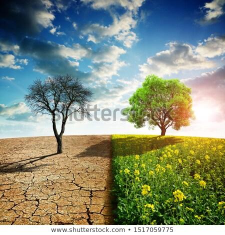 国 典型的な 高い 砂漠 シーン ストックフォト © craig