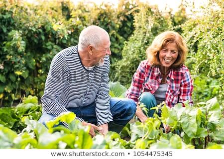 casal · de · idosos · jardinagem · mulher · flor · casa · primavera - foto stock © photography33