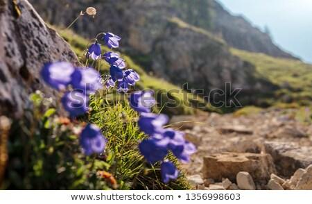 альпийский хижина лет пейзаж итальянский ярко Сток-фото © Antonio-S