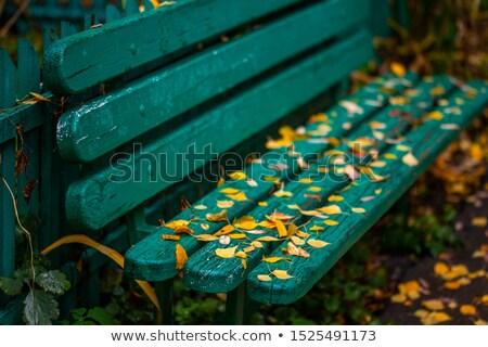 Shallow focus Green metal Benches Stock photo © bobkeenan