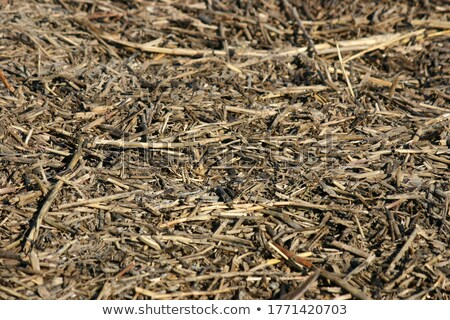 пути мертвых фон шаблон мусор грязи Сток-фото © chrisbradshaw