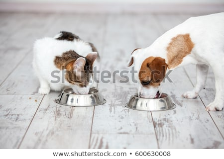cute cat in wooden bowl Stock photo © pterwort