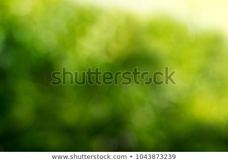 blurry green Stock photo © italianestro