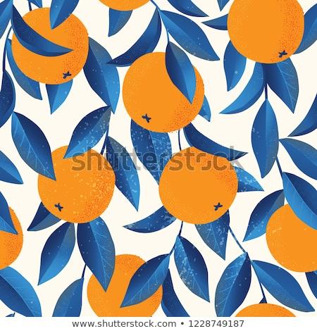Citrus abstract achtergrond vector afbeelding kunst Stockfoto © antkevyv