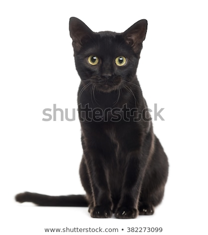 black cat stock photo © laks