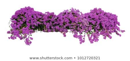 Roze plant bloemen groeiend voorjaar natuur Stockfoto © stocker