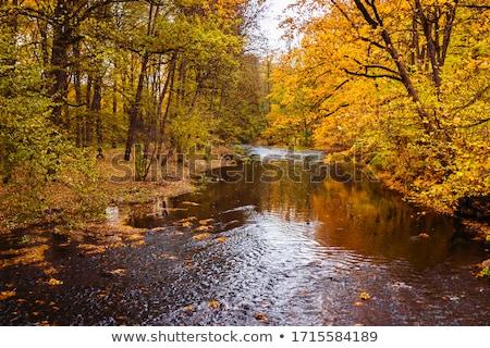 autunno · fiume · pietre · veloce · rocce - foto d'archivio © ondrej83