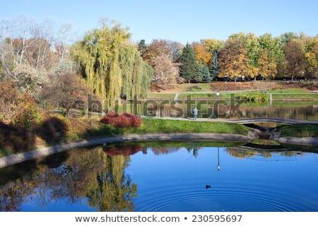 parco · Varsavia · città · Polonia · acqua · albero - foto d'archivio © rognar