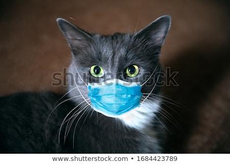 кошки глазах ребенка фон оранжевый Сток-фото © hanusst