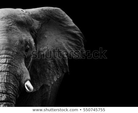 Elefánt kreatív közelkép afrikai elefánt feketefehér tájkép Stock fotó © Donvanstaden