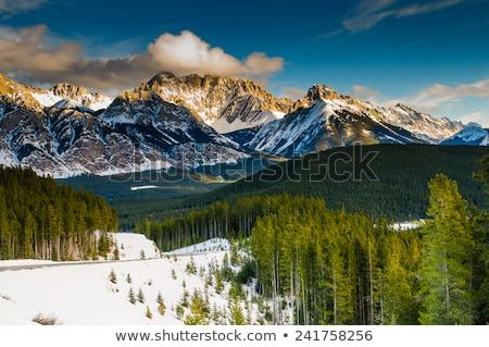 冬 表示 山 コロラド州 空 森林 ストックフォト © tang90246